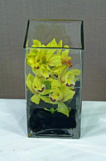 Mini cymbidium cube