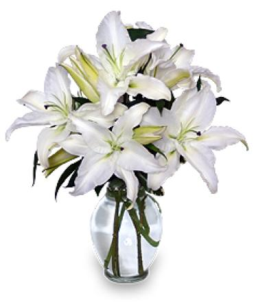 White Lily Simplicity