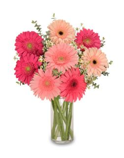 Brilliant Gerbera Daisy Display