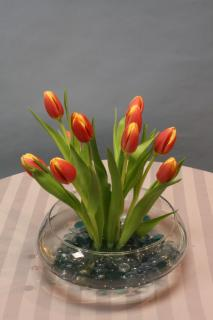 tulips growing
